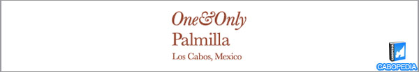 one and only palmilla banner